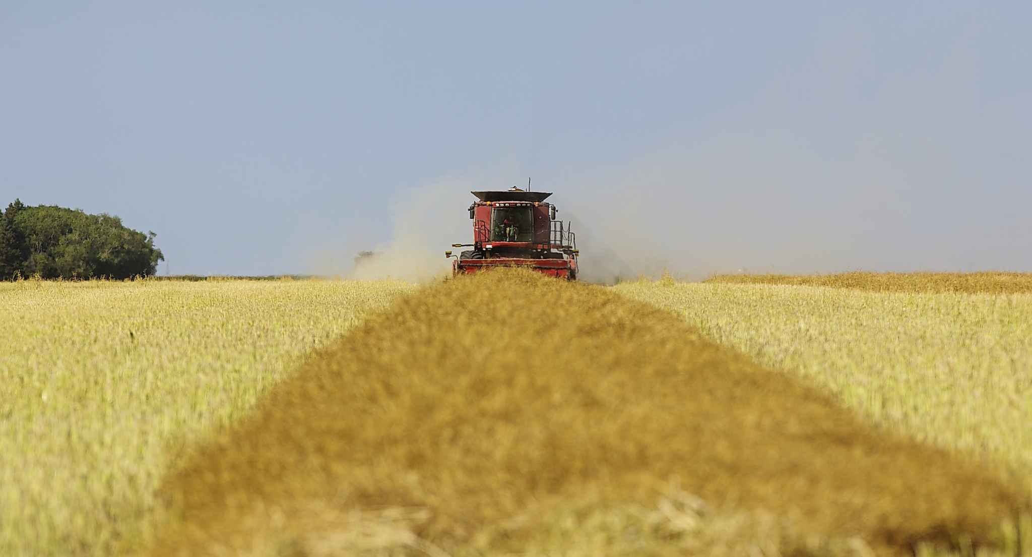 Save for meals or a breakdown, the family's two combines run non-stop until the sun goes down.