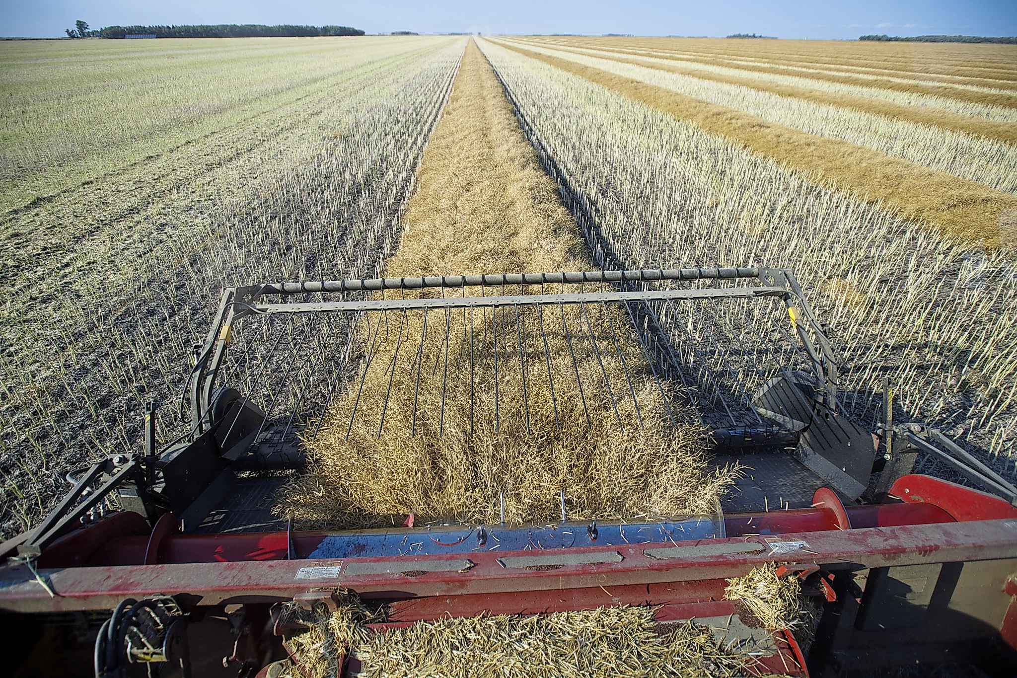 Colin leaves some plant debris on the fields at the end of the season and rotates his crops to deter pests and diseases.