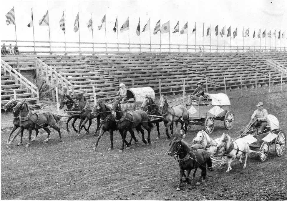 Chuck wagon outfits get ready for action at the Greater Winnipeg Exhibition and Stampede at Riel park,  August 2, 1954. At left is Stettler, Alberta resident Carl Barrett's outfit with driver Hally (Wag) Walgenback. The outfit won the Canadian championship in 1953 for most money earned. At centre is the Walter Kane outfit of Winnipeg, with driver Slim Helme of Esterhazy, and at right is a Shetland Pony outfit owned by Ray Stewart of Melfort, Sask.