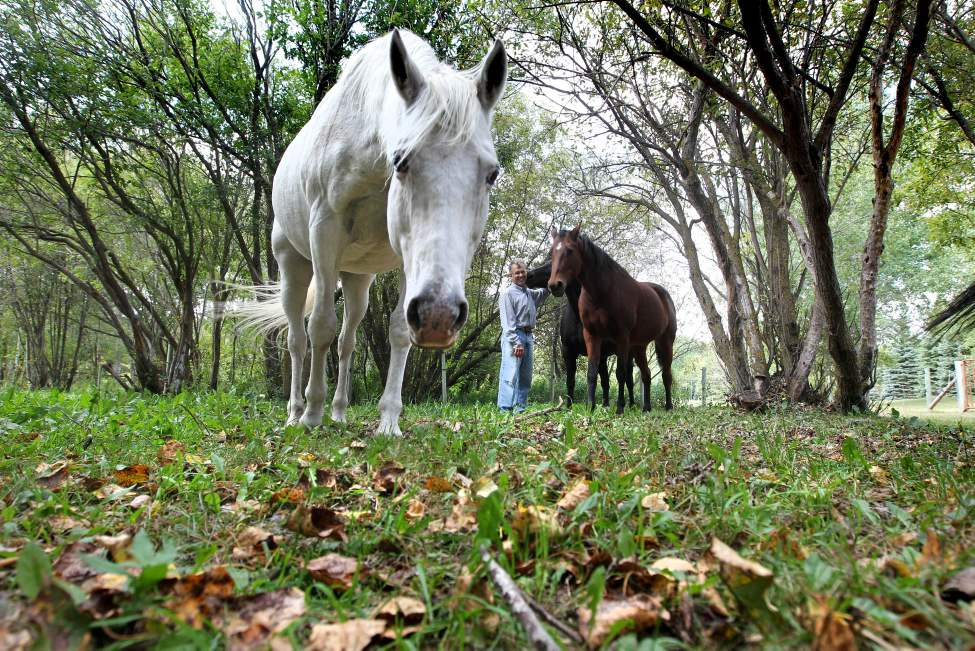 Don Rocan, a resident of Springfield municipality loves spending time with his horses on his acreage near Birds Hill Park. Sept  17, 2013 Ruth Bonneville / Winnipeg Free Press