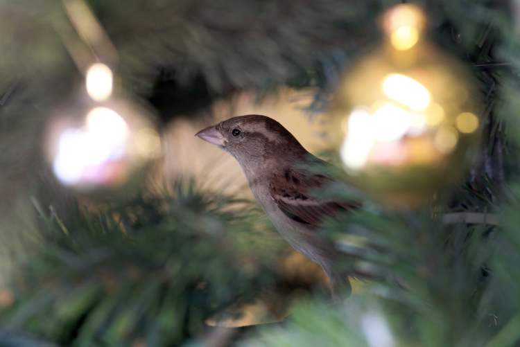 A sparrow flew inside and sat in the Christmas tree during Siloam Mission's annual Christmas lunch.