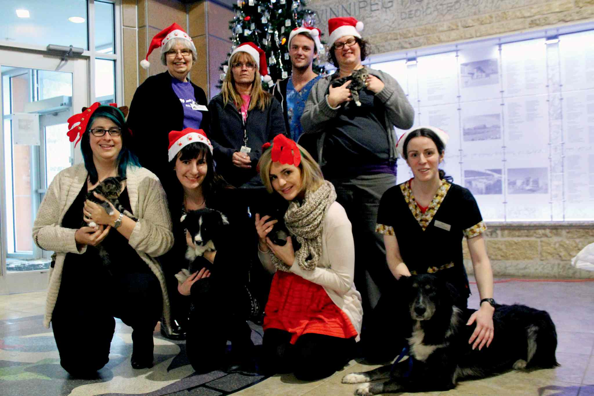 The donations department at the Winnipeg Humane Society is ready for Christmas, andhoping to receive some holiday goodwill as the society is overflowing with animals.