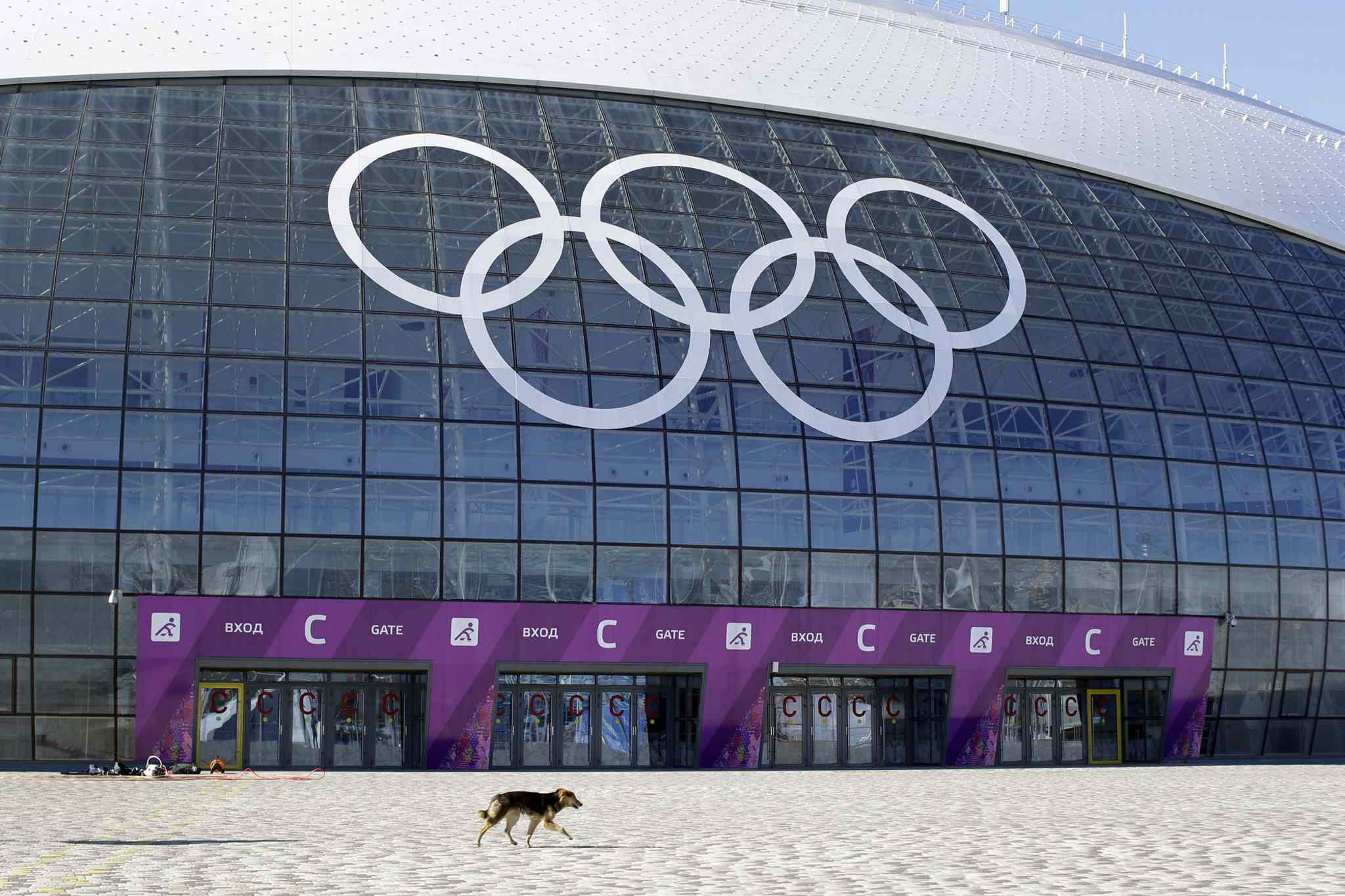 A stray dog walks outside the Ice Dome venue as preparations continue for the 2014 Winter Olympics in Sochi, Russia, Monday.