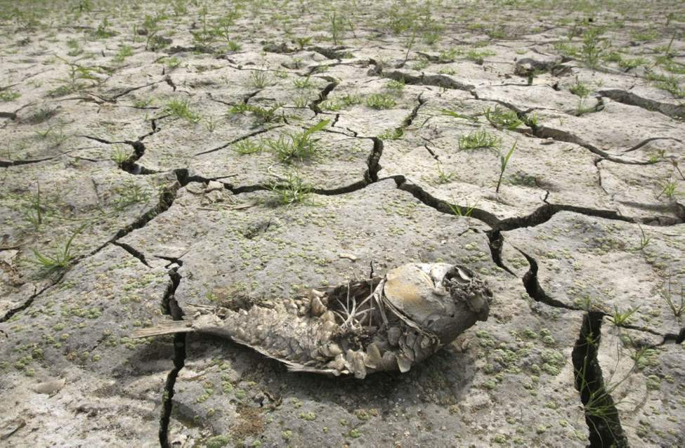 A dead fish lies on the cracked bed of a reservoir due to a severe months-long drought on the Korean Peninsula, in Bongdam in Seoul, South Korea. South Korean officials reported the worst drought in more than a century in some areas after nearly two months without significant rainfall. (AP Photo/Ahn Young-joon)