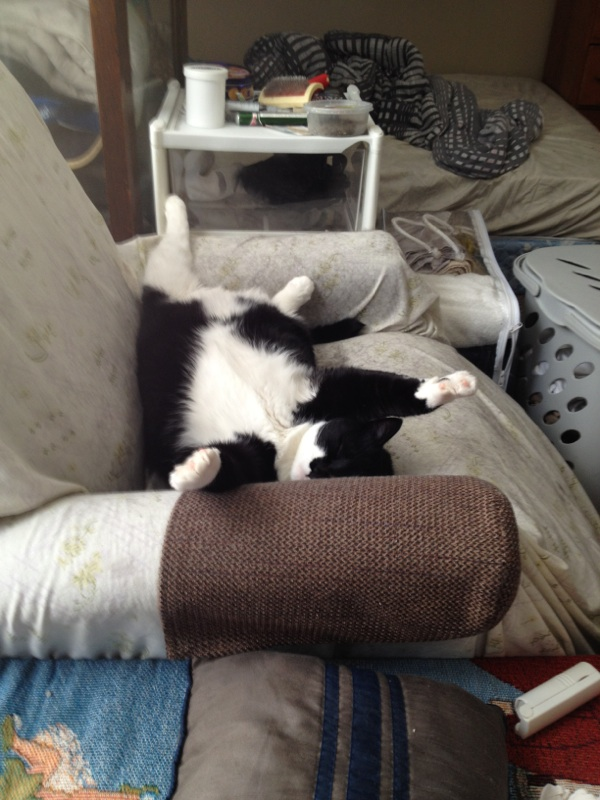 Stedman has a unique sense of humour. See the last photo for his full story. Pet Valu Fit Pet project. (Submitted photo)