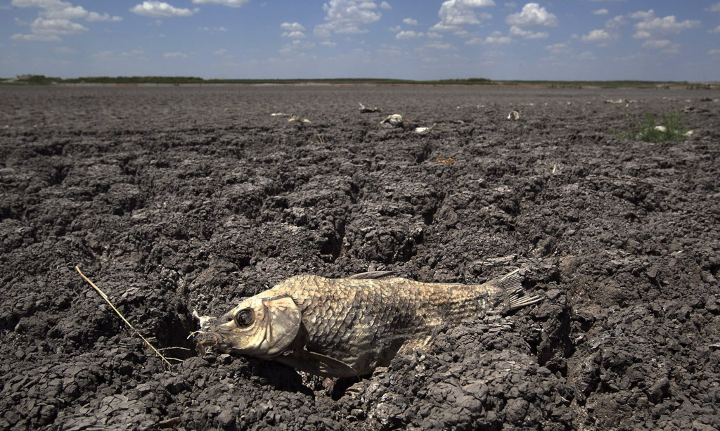 The remains of a carp litter a dried-out lake bed in Texas during a 2011 drought blamed on global warming.