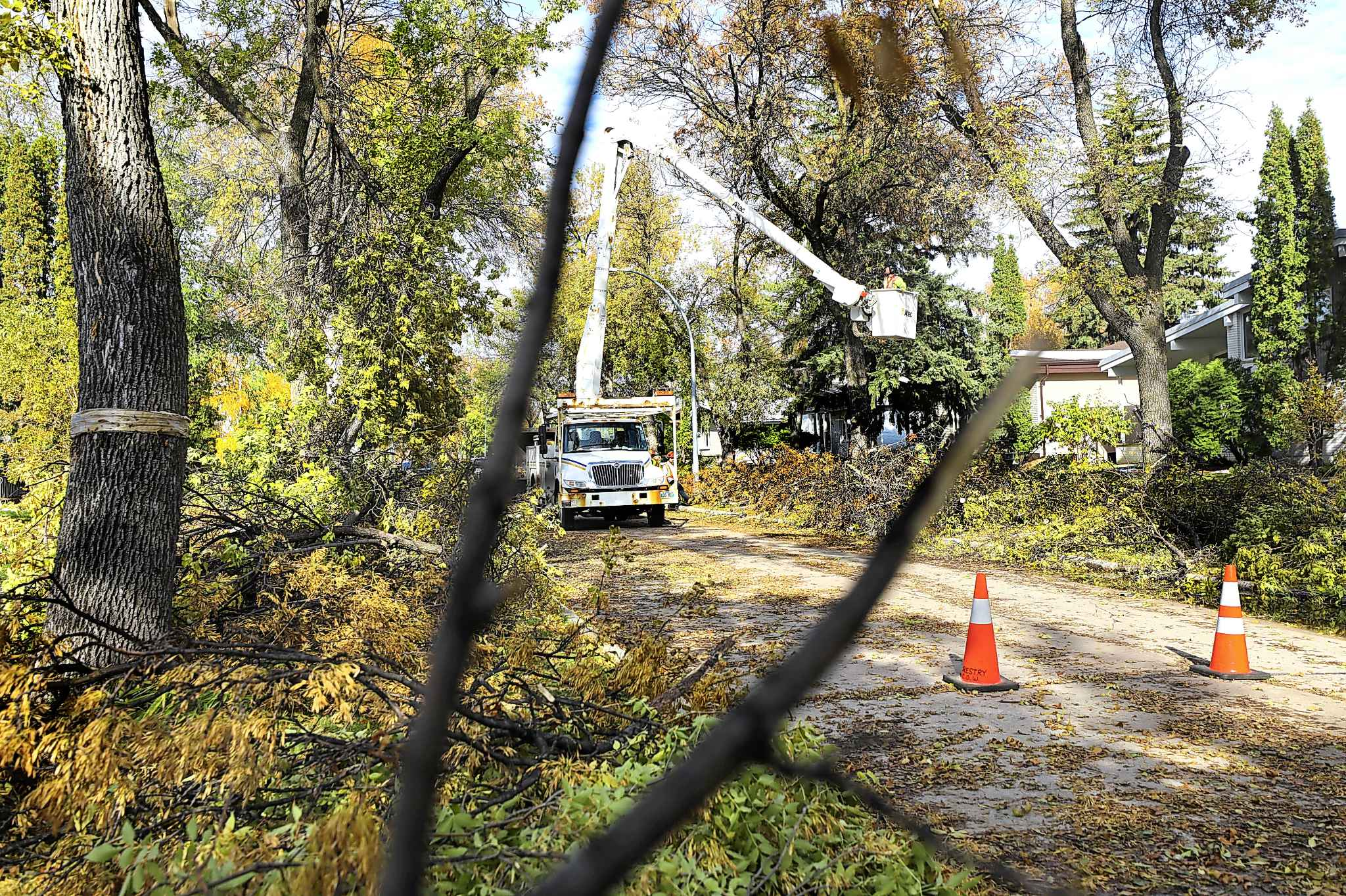 City of Winnipeg workers clean up broken tree branches that line the boulevards in south River Heights on Thursday.
