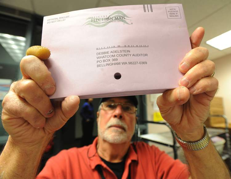 Election worker Richard Coit makes sure all ballots are removed from envelopes by looking through the hole in the middle of the envelopes at the Whatcom County Auditor's office on Election Day, Tuesday, in Bellingham, Washington. More then half of the registered voters in Whatcom County had already turned in their ballots before Election Day.