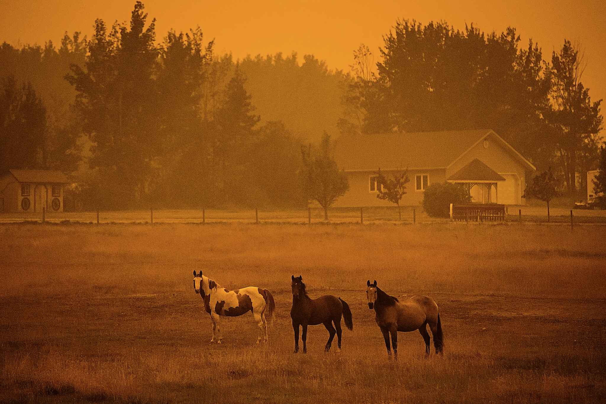 Thick smoke from wildfires fills the air and blocks out the sun as horses stand on a ranch just before 6 p.m. in Vanderhoof, B.C., on Wednesday. According to Environment Canada, sunset in the town on Wednesday was at 8:30 p.m. (Darryl Dyck / The Canadian Press)