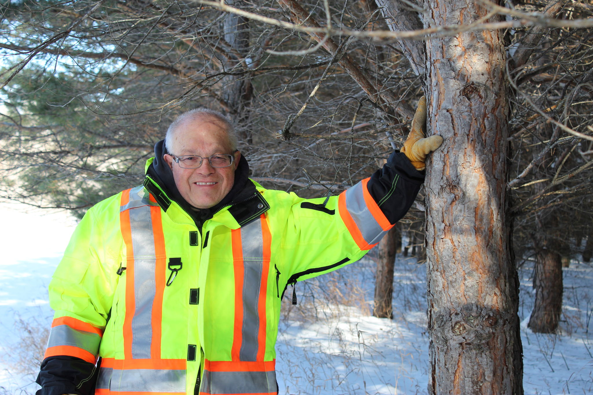 Andrew Fast stands amid trees he planted 30 years ago at Frosty Mountain Tree Farm, his woodlot south of Marchand.