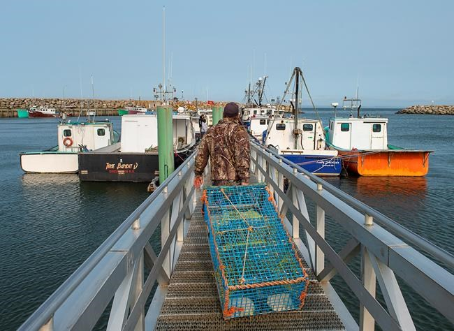 Members of the Sipekne'katik First Nation load lobster traps on the wharf in Saulnierville, N.S., after launching its own self-regulated fishery on Thursday, Sept. 17, 2020. Mi'kmaq communities in Nova Scotia are restocking lobster traps for Indigenous harvesters after a flotilla of non-Indigenous fishing boats removed the gear from St. Mary's Bay over the weekend. THE CANADIAN PRESS/Andrew Vaughan