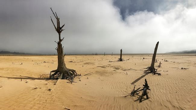 Western Cape declared disaster area over drought