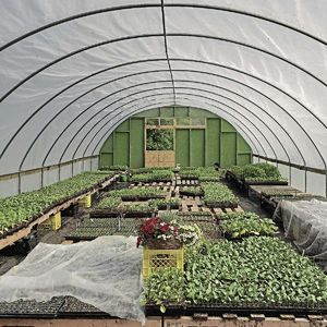 The market gardeners used a temporary greenhouse  to protect vegetable seedlings from cold temperatures in early May.