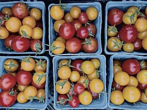 The market gardeners are now selling cherry tomatoes.