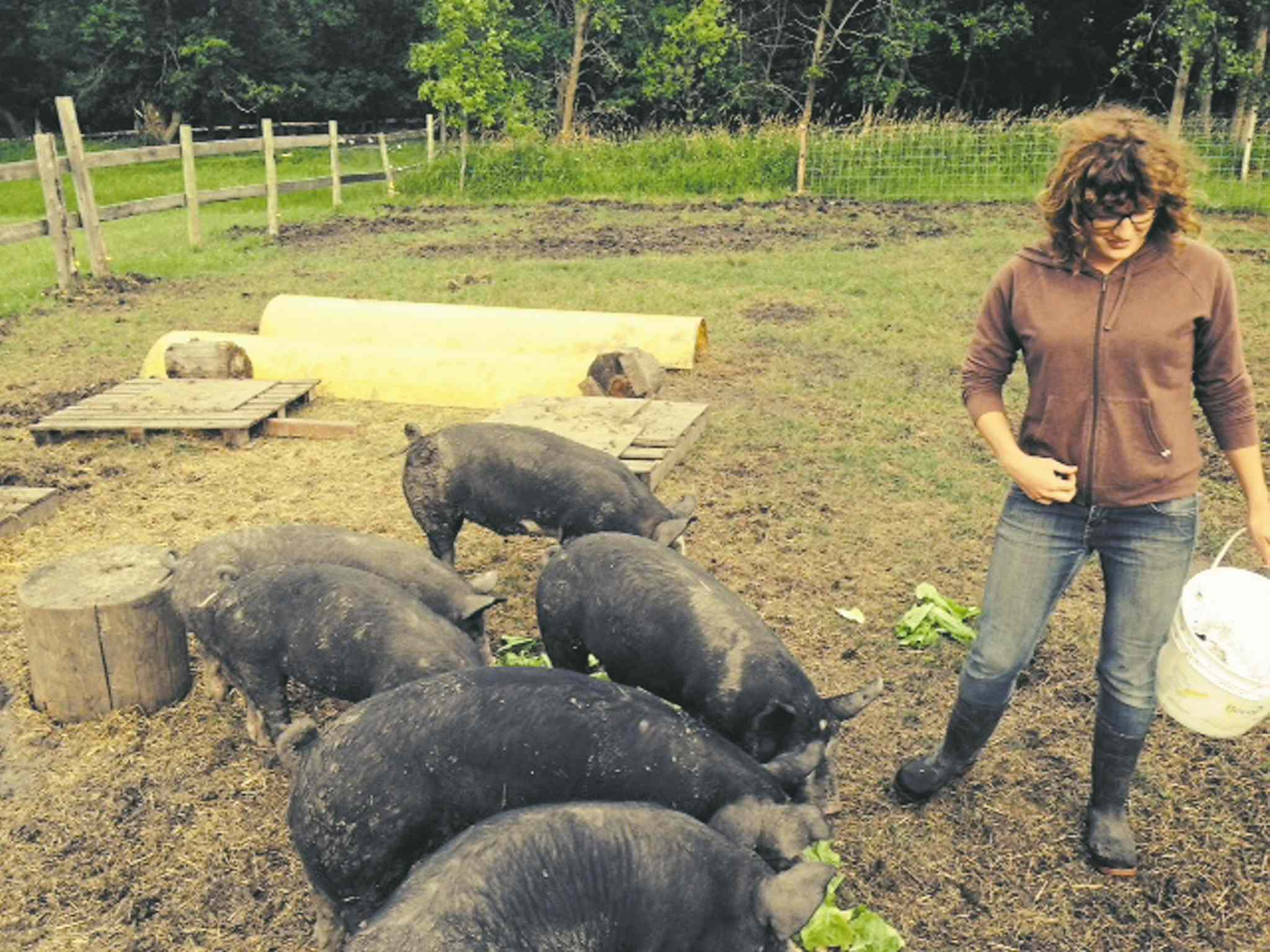Spain is pictured with some of her pigs.