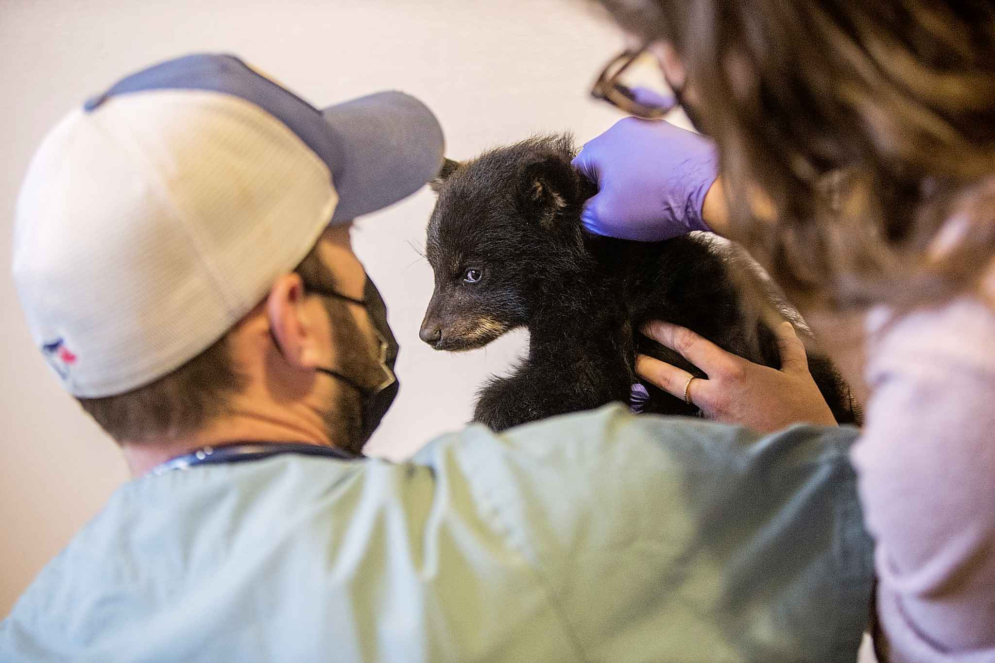 Veterinarian Justin Rosing and Fiona Mulhern do a check-up on the cub.