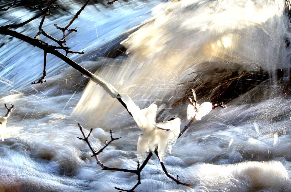 Cool spring temperatures allow ice to form and cling to branches leaning over Sturgeon Creek. 