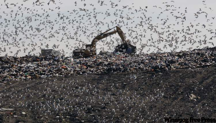 Seagulls swarm the Brady Road Landfill, an ongoing problem for the dump.  The city is gearing up for a public trash expo at the Winnipeg Convention Centre on Nov. 13 that will let Winnipeggers weigh in on how to deal with the city's trash.
