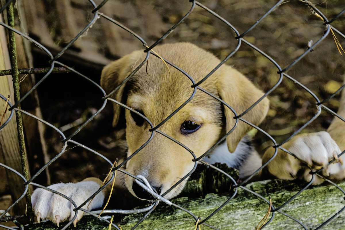 Watch out for signs of a puppy mill - Winnipeg Free Press