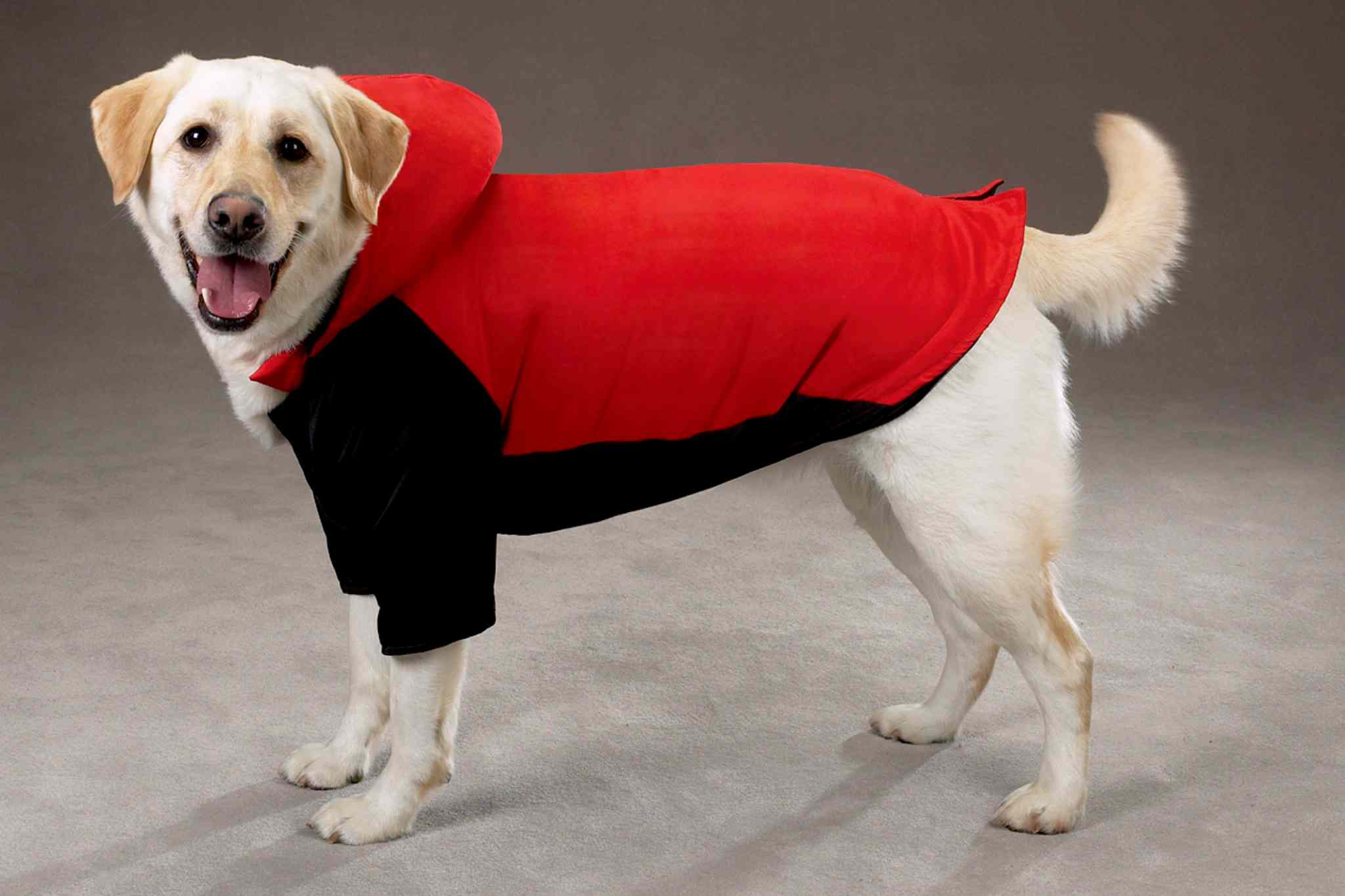 A coat can help short-coated dogs keep warm during the cold winter months.