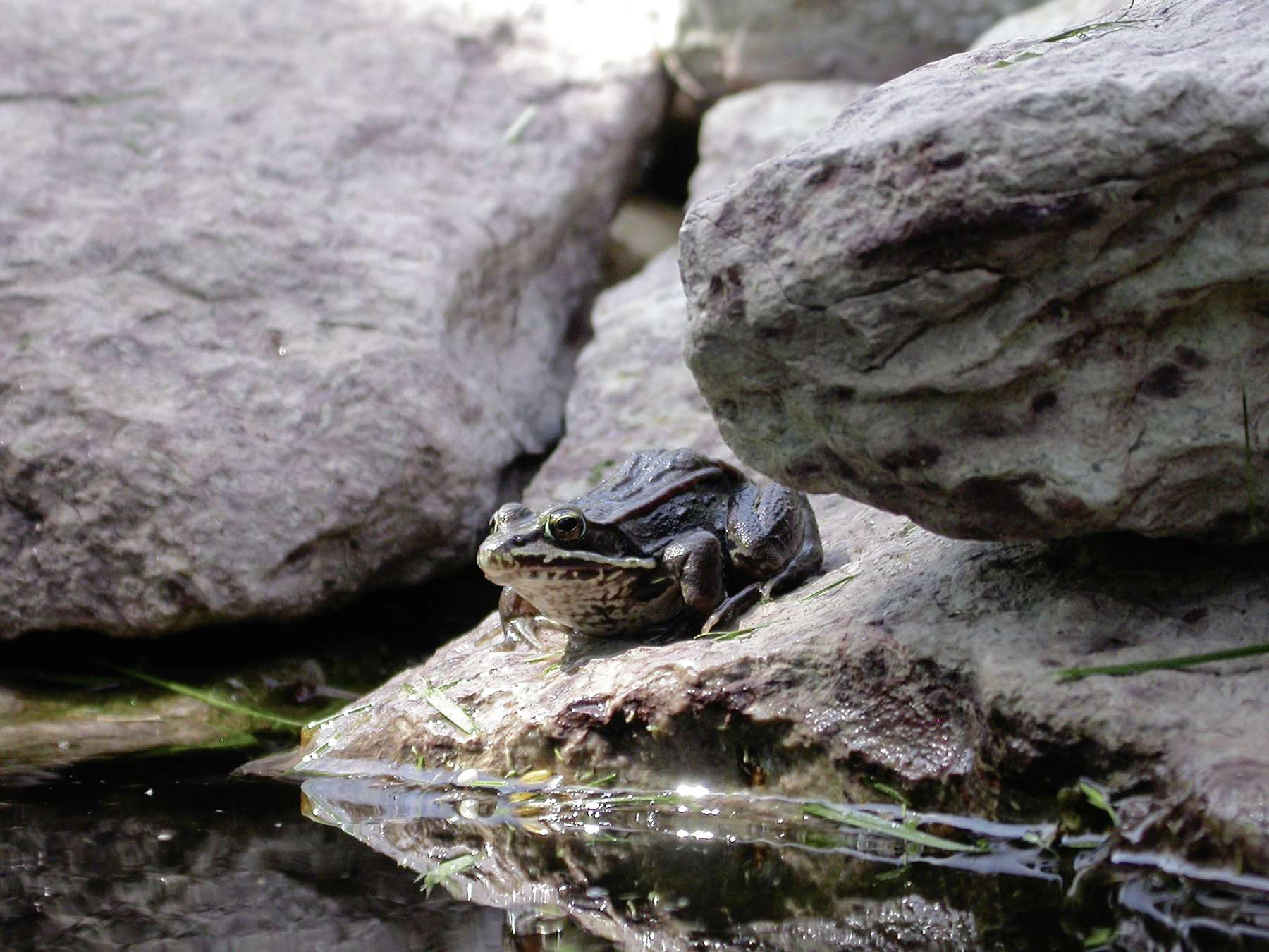 Listening to the frogs at dusk may reduce stress.