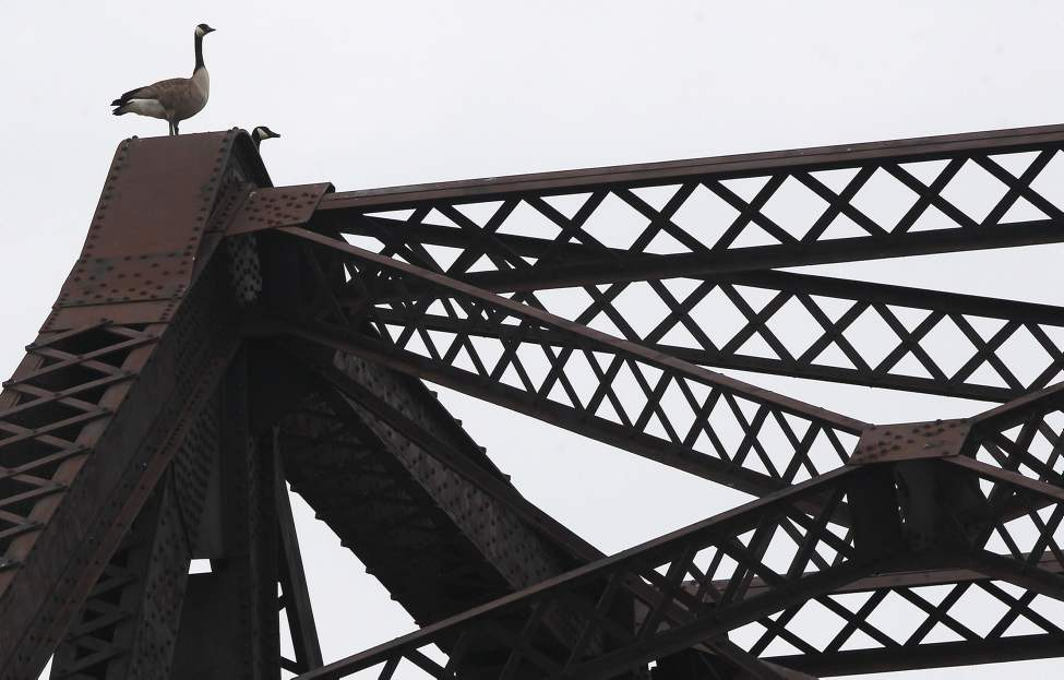 DAY TWO - Two Canada geese perch themselves for a perfect view at the top of a railway bridge near Lombard Avenue and Waterfront Drive in downtown Winnipeg Tuesday, May 01, 2012.   