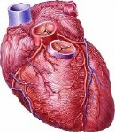 Technique can trigger body's defense system to protect the heart, experts say.