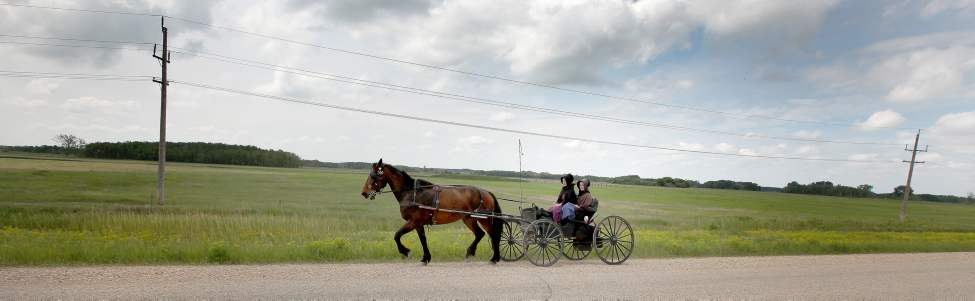 Members of a traditional Mennonite community near Plumas, Manitoba travel by horse and buggy. June 21, 2013  (Phil Hossack / Winnipeg Free Press)