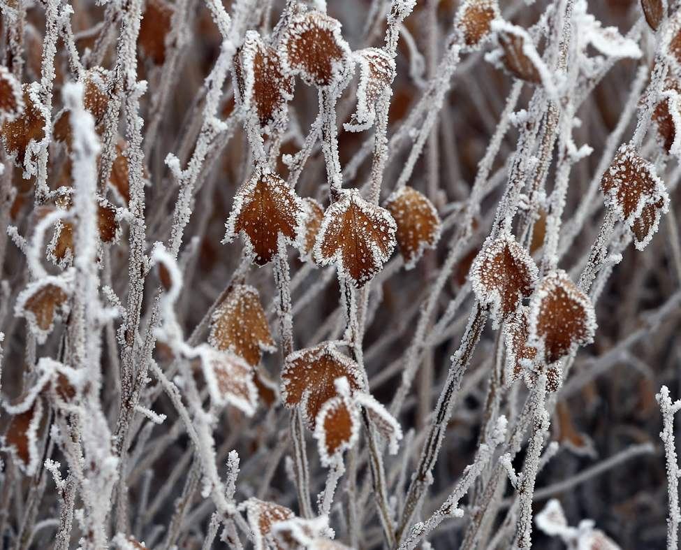 Heavy morning fog created this beautiful and delicate hoar frost design. March 20, 2014 (KEN GIGLIOTTI / WINNIPEG FREE PRESS)
