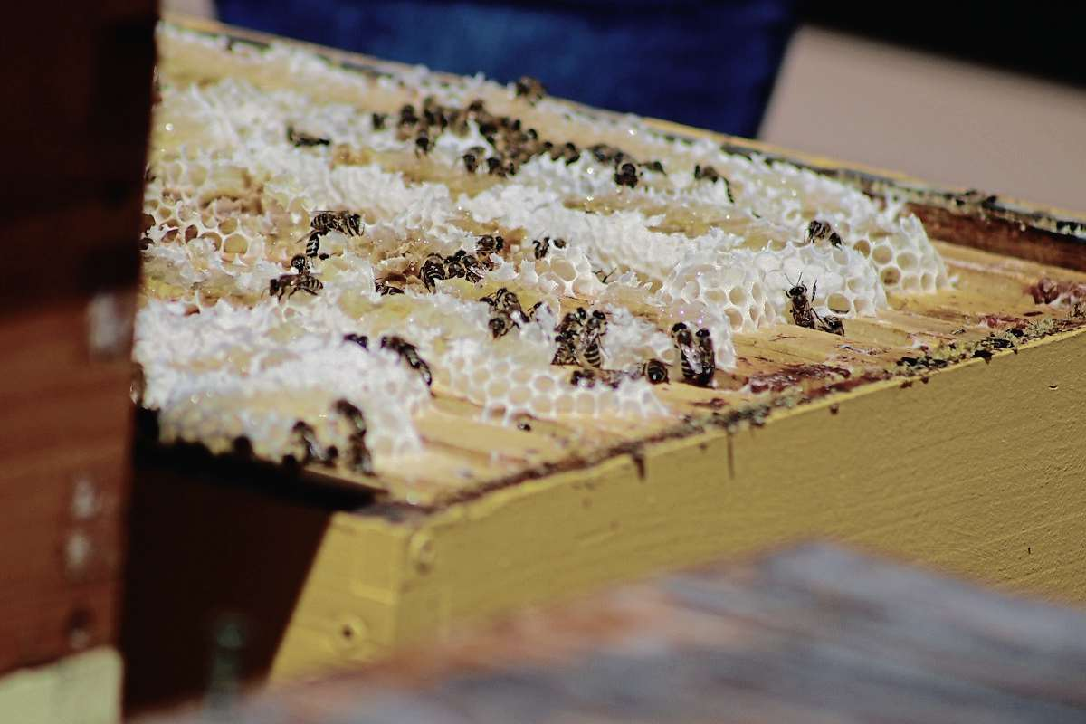 The beehives at Red River College produce approximately 100 kilograms of honey every year.