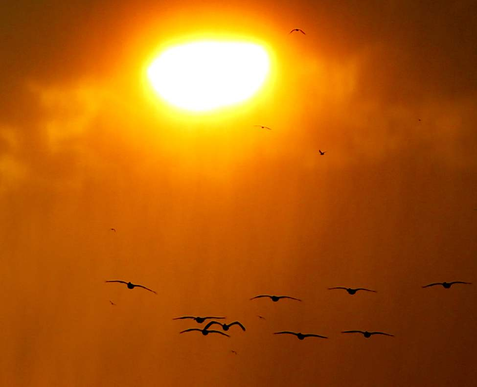 From Lakeshore Heights just south of Grand Beach, pelicans fly through a sunset in the rain. June 3 2012 (BORIS MINKEVICH PHOTO / WINNIPEG FREE PRESS)