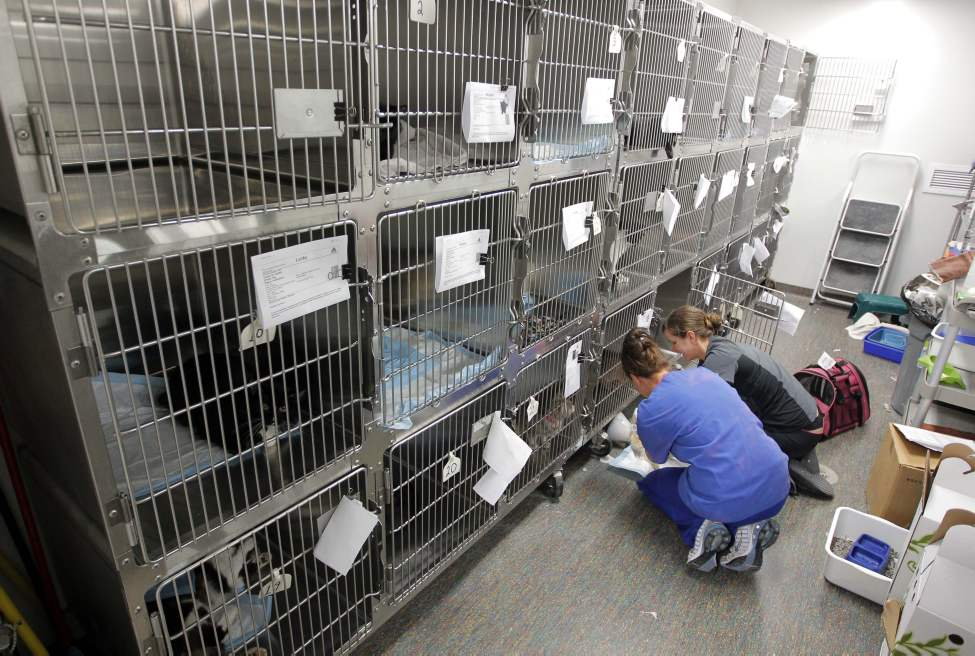 The holding cages.  (Boris Minkevich/Winnipeg Free Press)