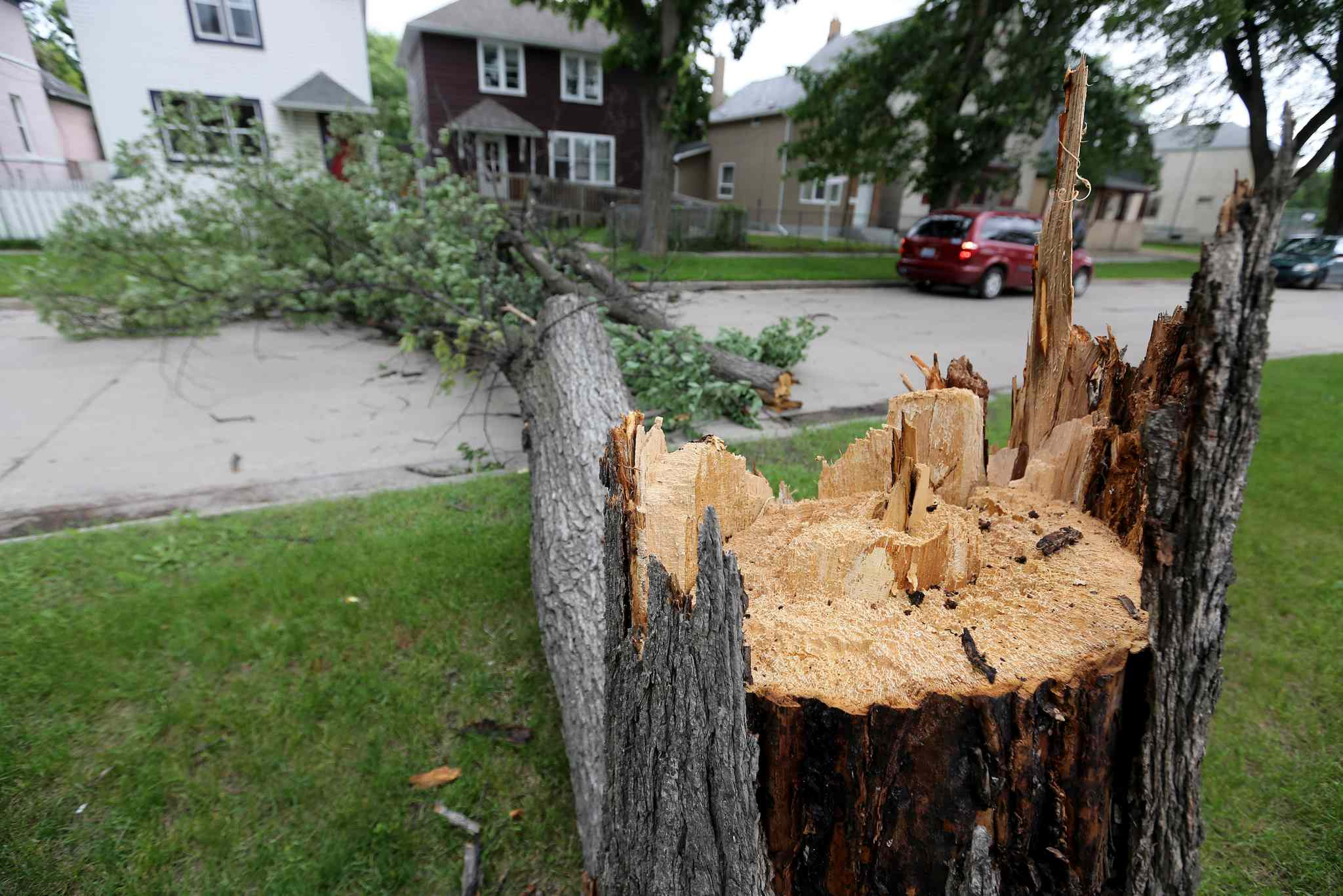 A large tree broken at the trunk lays across Pritchard Avenue between Charles and Aikens after strong winds overnight, Sunday, June 29, 2014.
