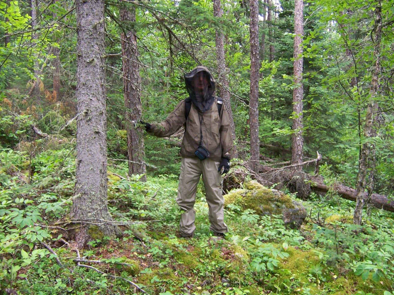 Zeilig decked out in mosquito-blackfly netting during a day hike in the boreal forest.